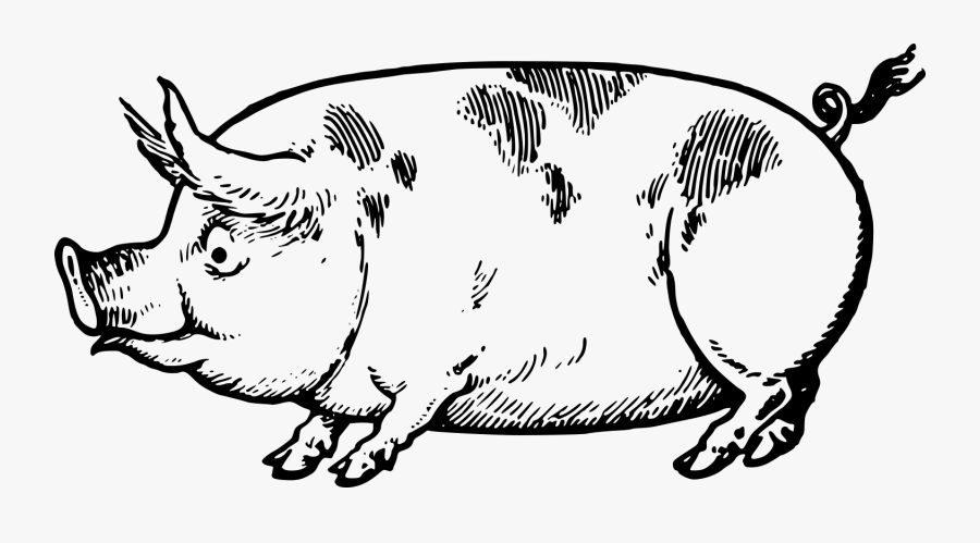 Cute Vintage Pig Clip Art & Stock Vector - Eg Lutz Drawing Made Easy, Transparent Clipart