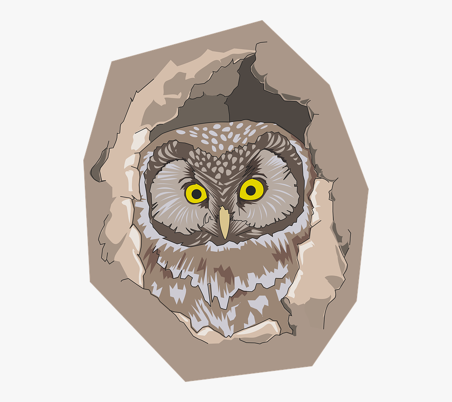 Bird, Hole, Nature, Owl - Owl In A Hole Of Tree Colouring Page, Transparent Clipart