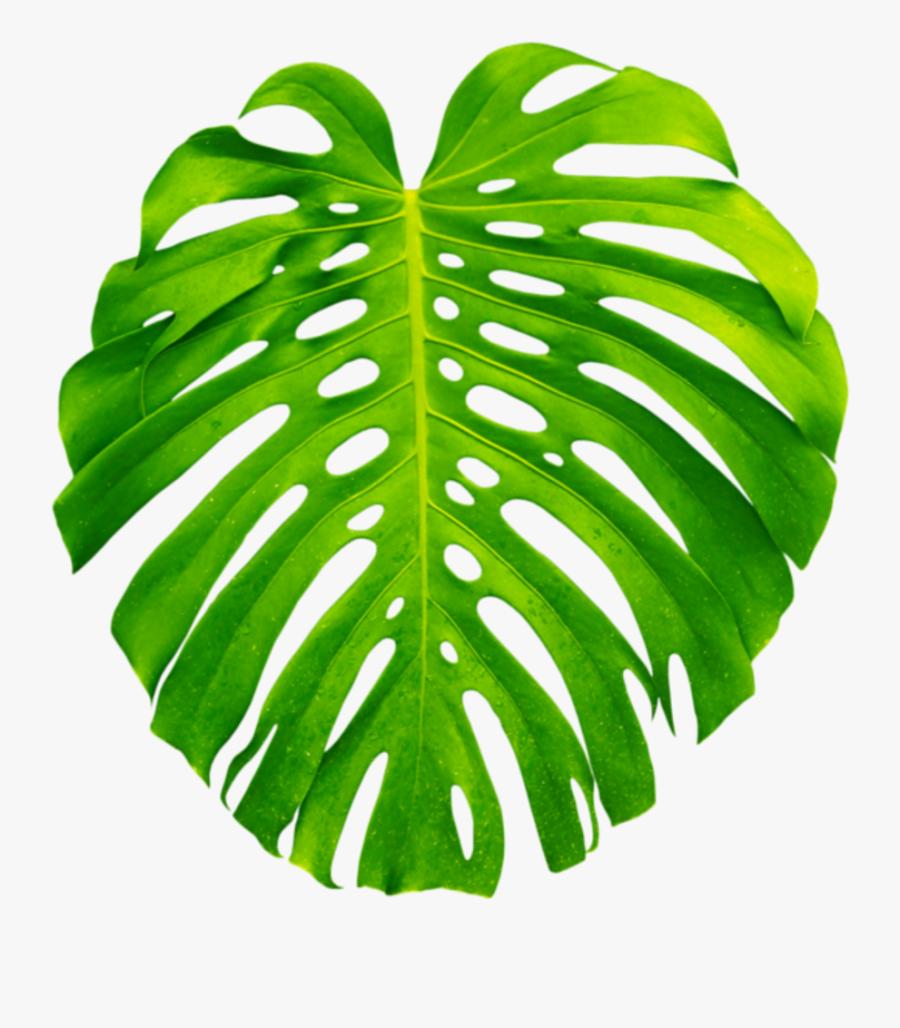Palm Palms Leaf Leaves Green Tropics Summer Vacation - Tropical Palm Leaf Transparent, Transparent Clipart