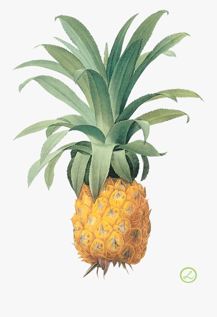 April 2018 Calendar With Pineapples - Pineapple Illustration, Transparent Clipart