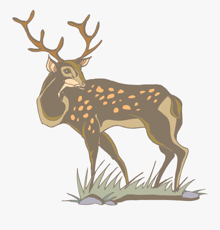 Transparent Whitetail Deer Png - Deer, Transparent Clipart