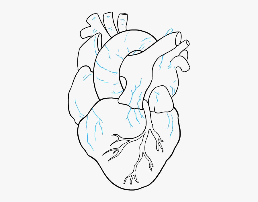 Clip Art How To A Really - Real Heart Simple Drawing, Transparent Clipart
