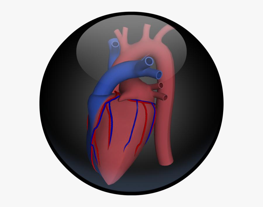 Transparent Human Heart Png - Illustration, Transparent Clipart