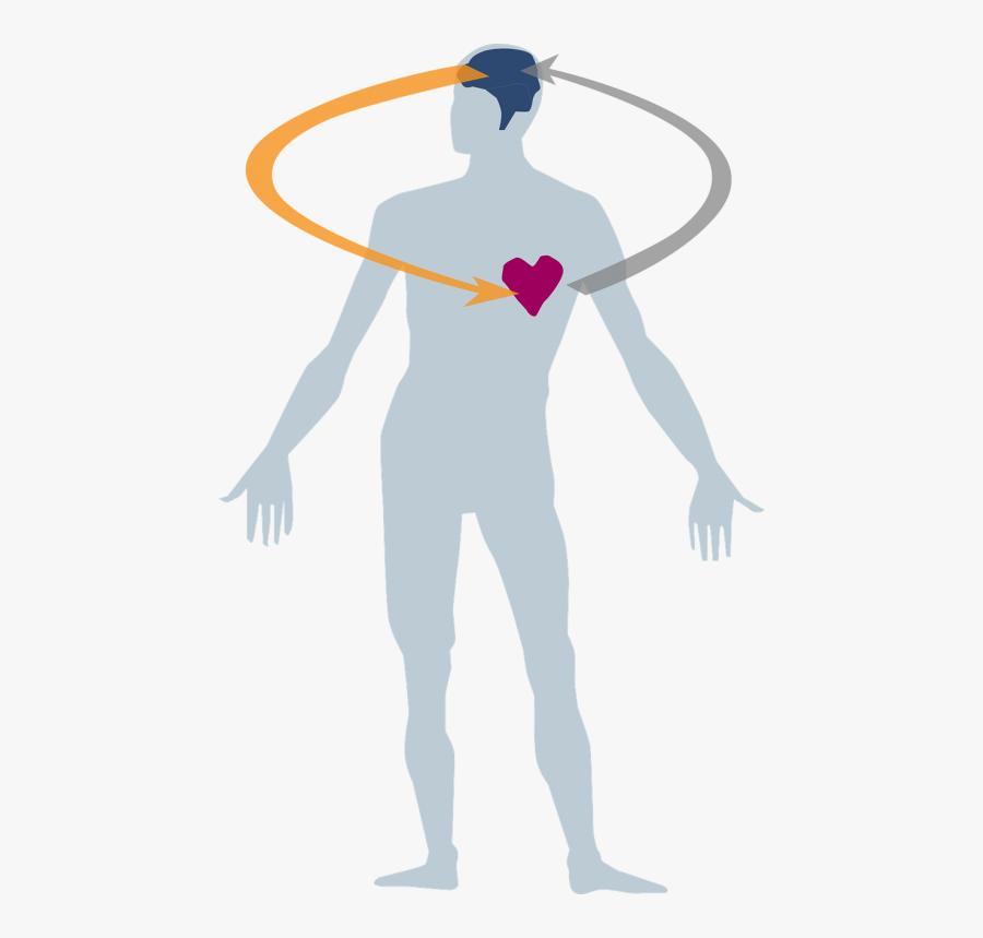 Transparent Body Heart Clipart - Herz Geist Seele Leib, Transparent Clipart