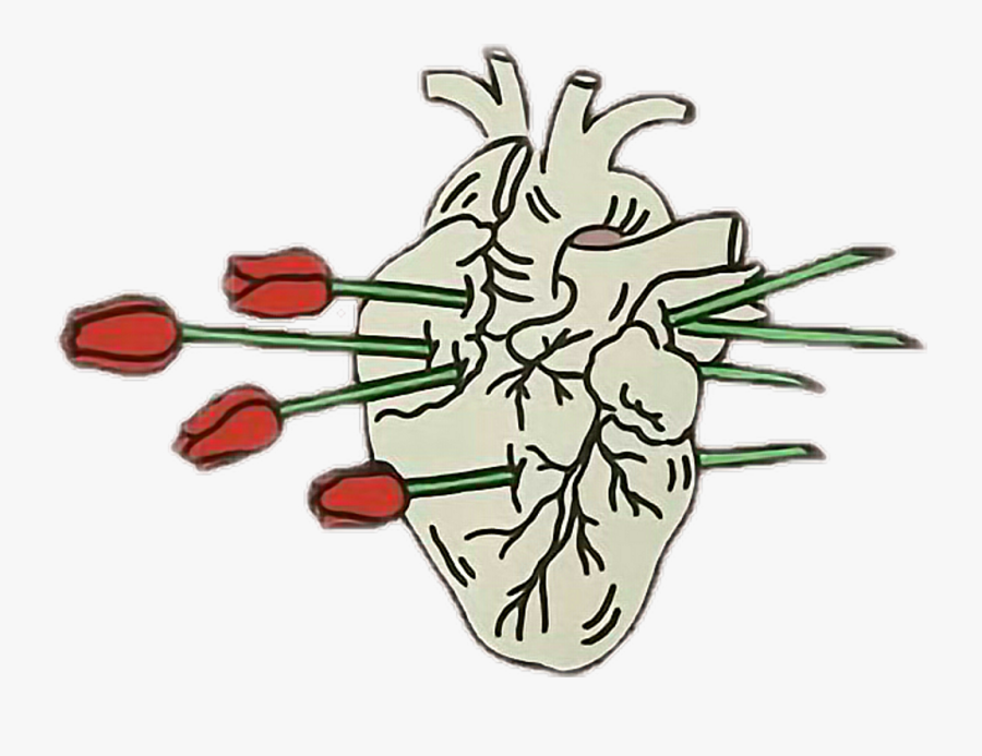 Free Real Heart Sketch, Download Free Clip Art, Free - Human Heart Aesthetic Png, Transparent Clipart