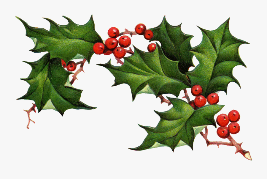 Christmas Holly Border Free Clipart Free Clip Art Images - American Holly, Transparent Clipart