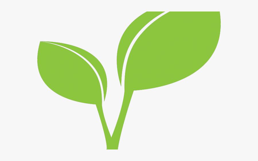 Green Leaves Clipart Coconut Leave - Plant Leaf Clipart, Transparent Clipart