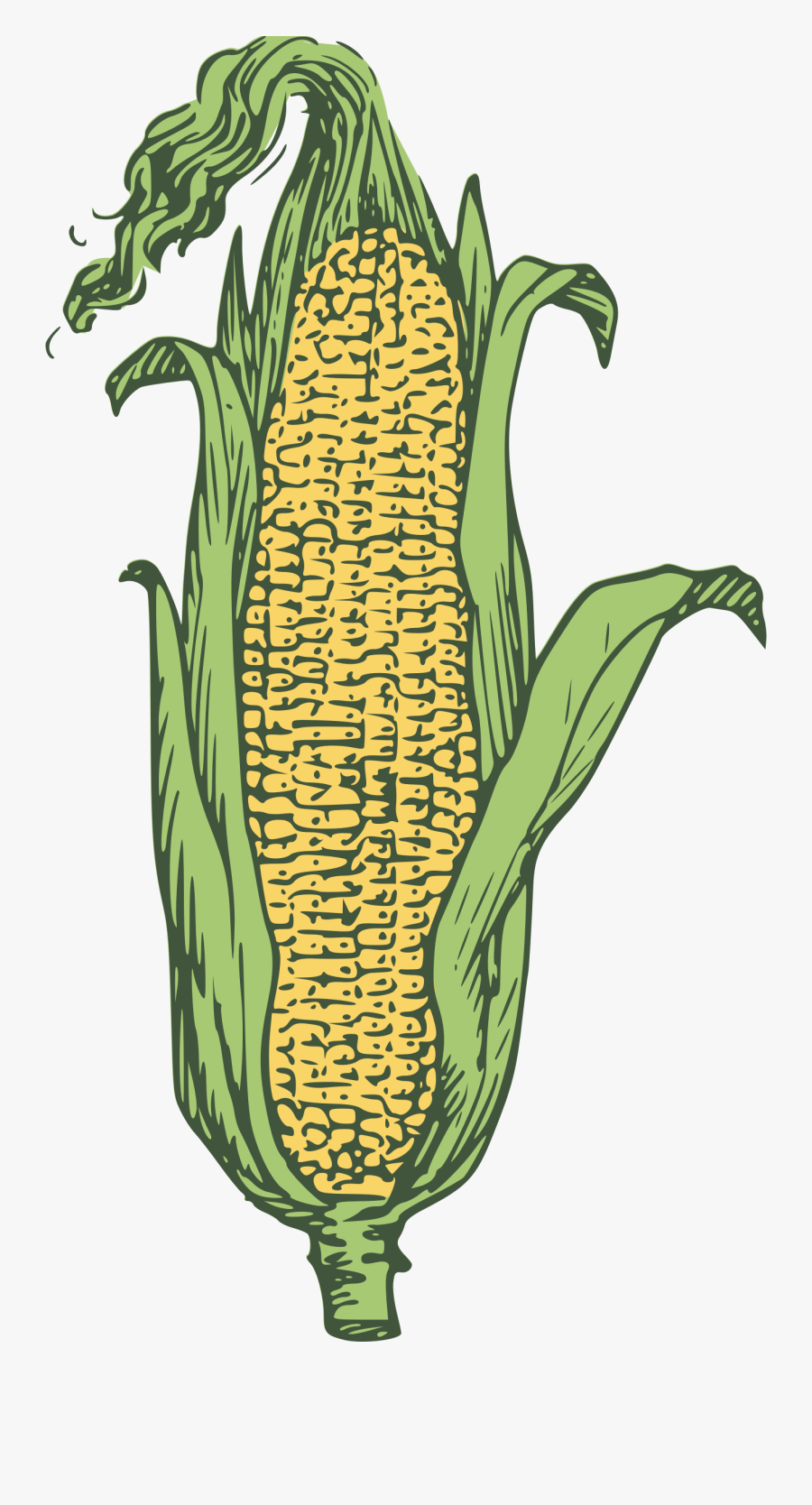 Ear Of Corn Clipart - Ear Maize, Transparent Clipart