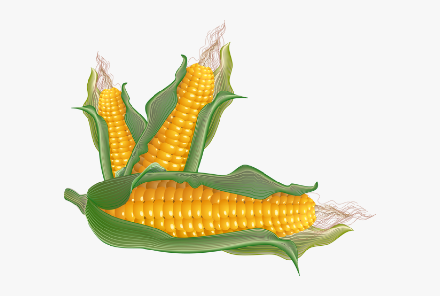 Corn - Clipart - Ears Of Corn Clip Art, Transparent Clipart
