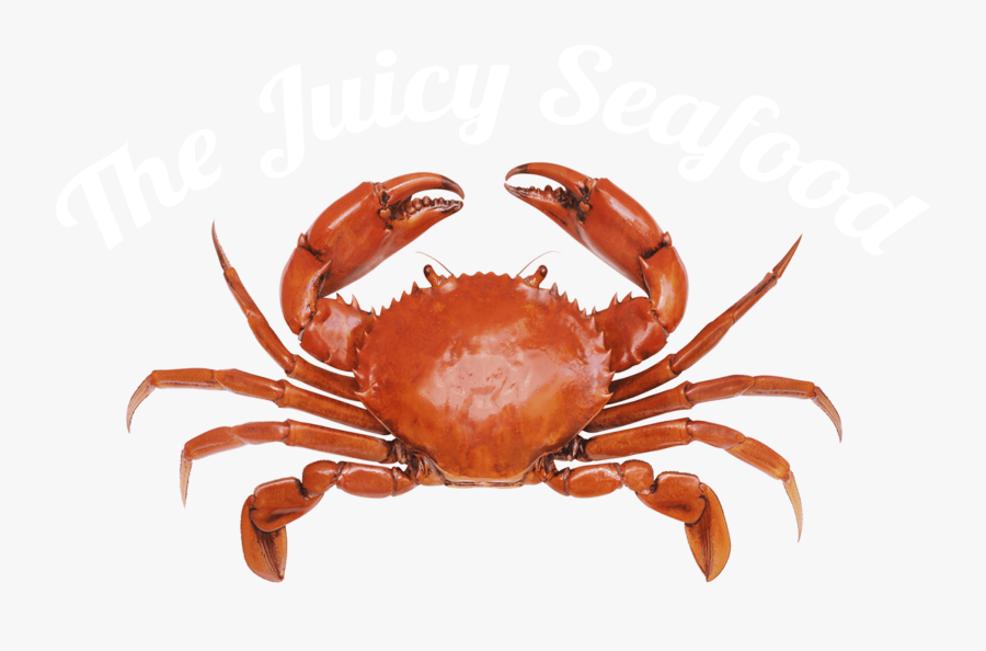 Local Seafood Restaurant Savannah, Ga - Crab With White Background, Transparent Clipart