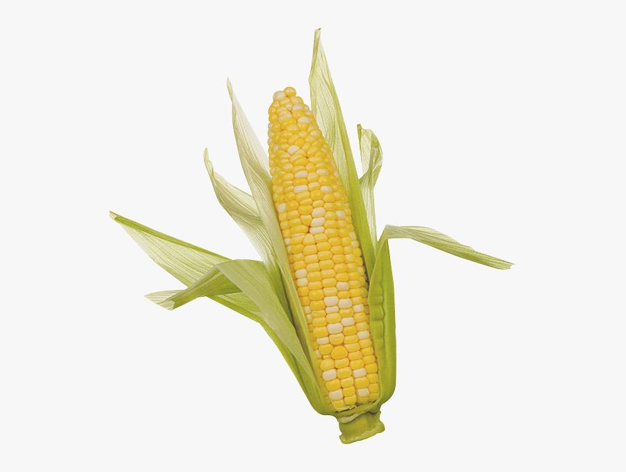 Download Corn Png Clipart - Ear Of Corn, Transparent Clipart