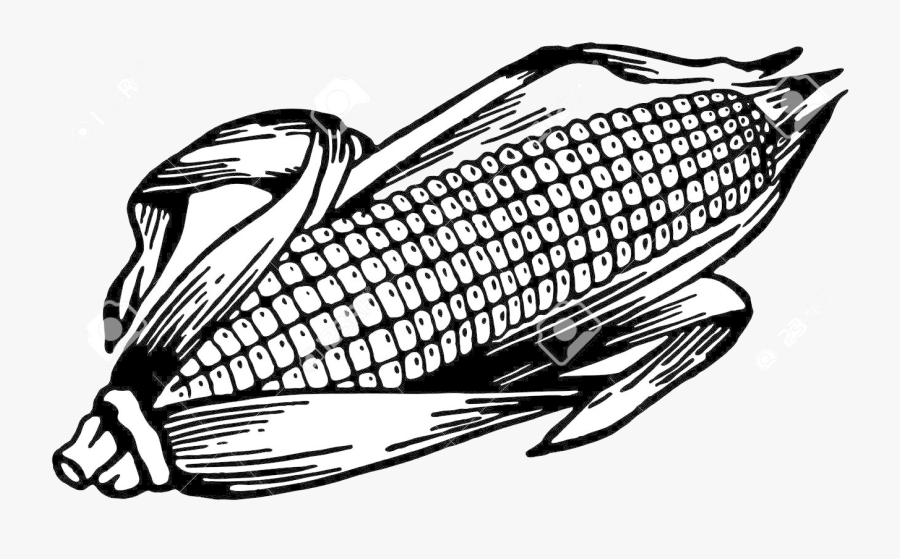 Corn Clipart Ear For Free And Use Images In Transparent - Vector Ear Of Corn, Transparent Clipart