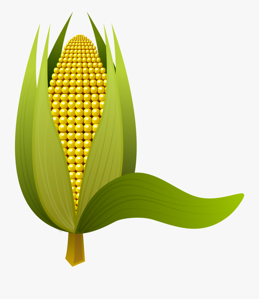Ear Of Corn Clipart 8, - Buah Jagung, Transparent Clipart