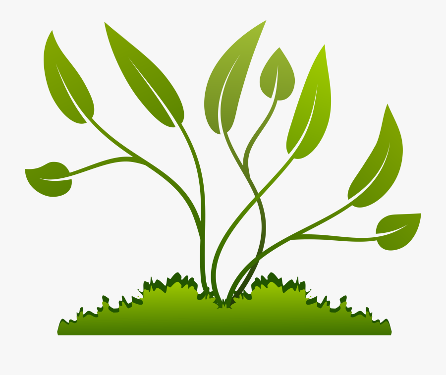 Stem,grass Family,clip Art,flowering Plant,graphics - Small Plant Growing Png, Transparent Clipart