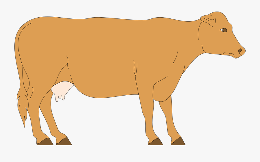 Cow, Livestock, Cattle, Farm, Animal, Beef, Dairy - Cow Walking Animated Gif, Transparent Clipart