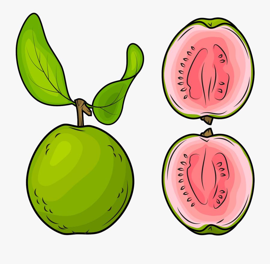 guava clipart free transparent clipart clipartkey guava clipart free transparent