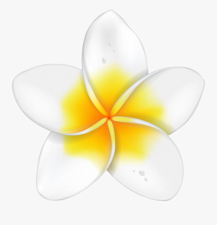 Exotic Flower Plumeria Png Clip Art Imageu200b Gallery, Transparent Clipart
