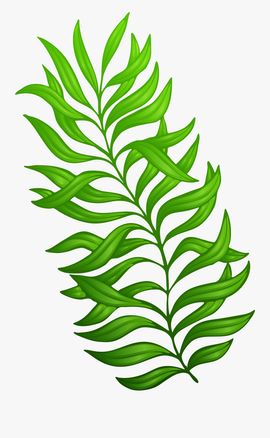Exotic Green Image Gallery - Plant Clip Art Png, Transparent Clipart