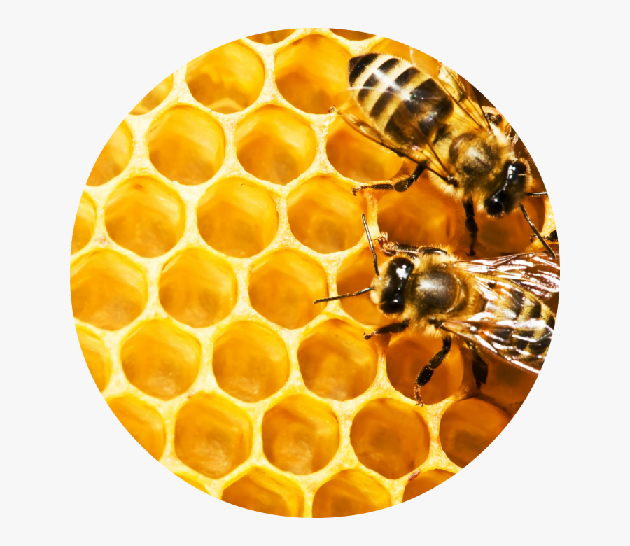 Skip To The End Of The Images Gallery - Circle Honeycomb, Transparent Clipart