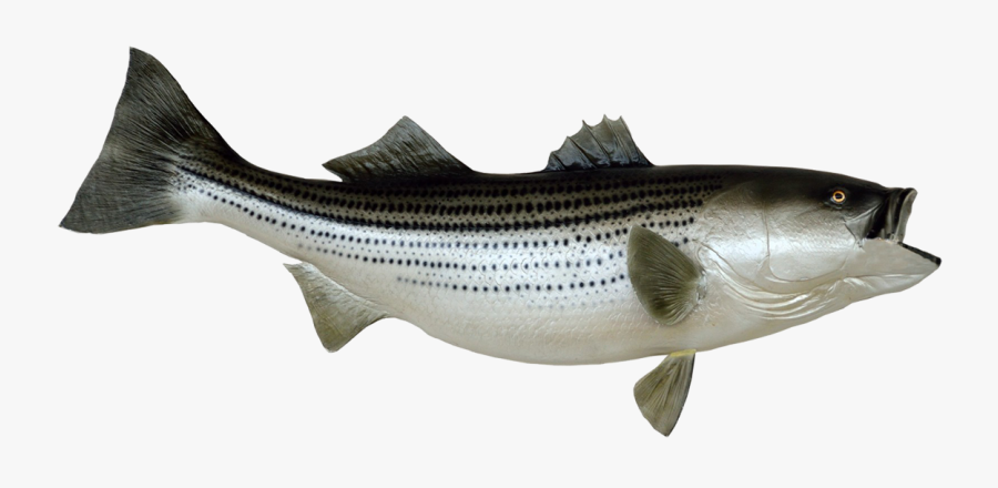 Fish Clip Art Png Stock - Royalty Free Striped Bass Art, Transparent Clipart