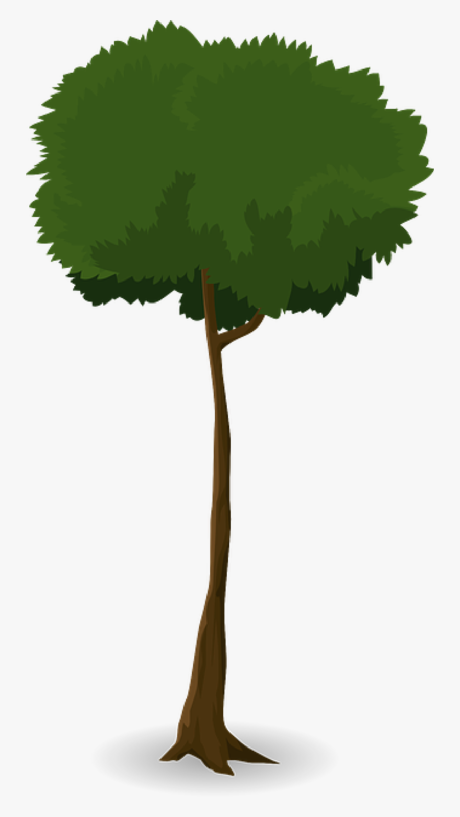Tree Trunk Nature Leaves Branches Graphic Organic - Trunk, Transparent Clipart