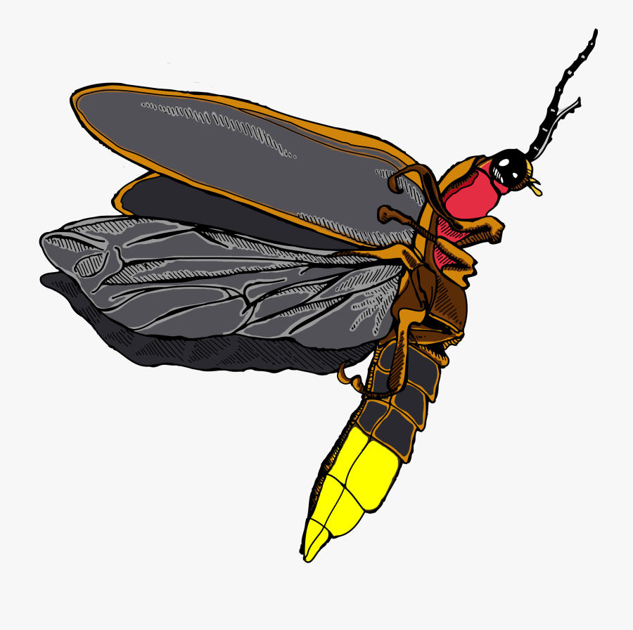 Clipart Free Png For Free - Firefly Png, Transparent Clipart