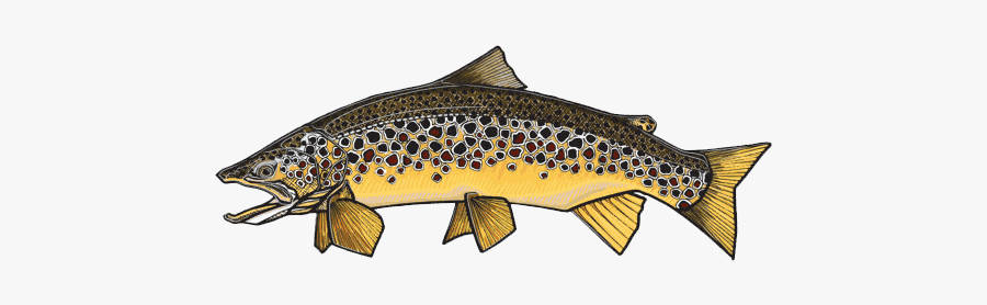 Clip Art Casey Underwood Fly Fishing - Brown Trout Design Cartoon, Transparent Clipart