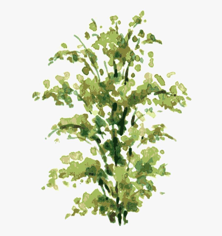 Transparent Bush Plant Png - Plants Watercolor Tree Elevation Png, Transparent Clipart
