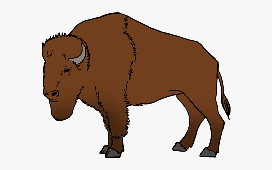 How To Draw Buffalo - Easy How To Draw A Buffalo, Transparent Clipart