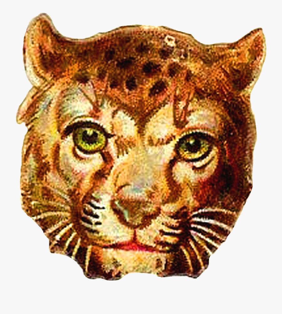 Lion, Transparent Clipart