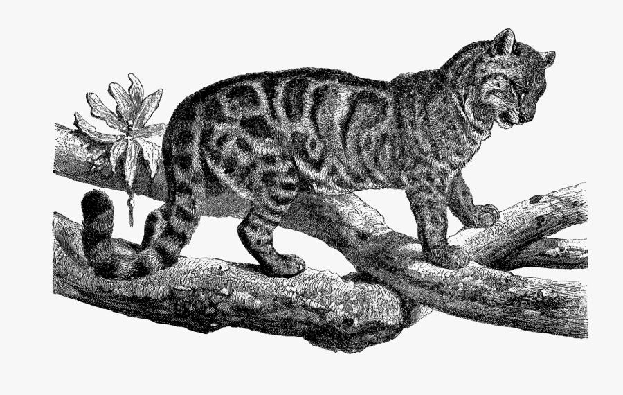 Transparent Leopard Spots Clipart - Cat, Transparent Clipart