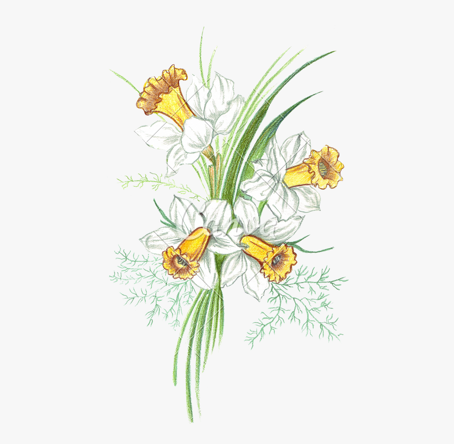 Colored Drawing Lily - Flower Colour Drawing Png, Transparent Clipart