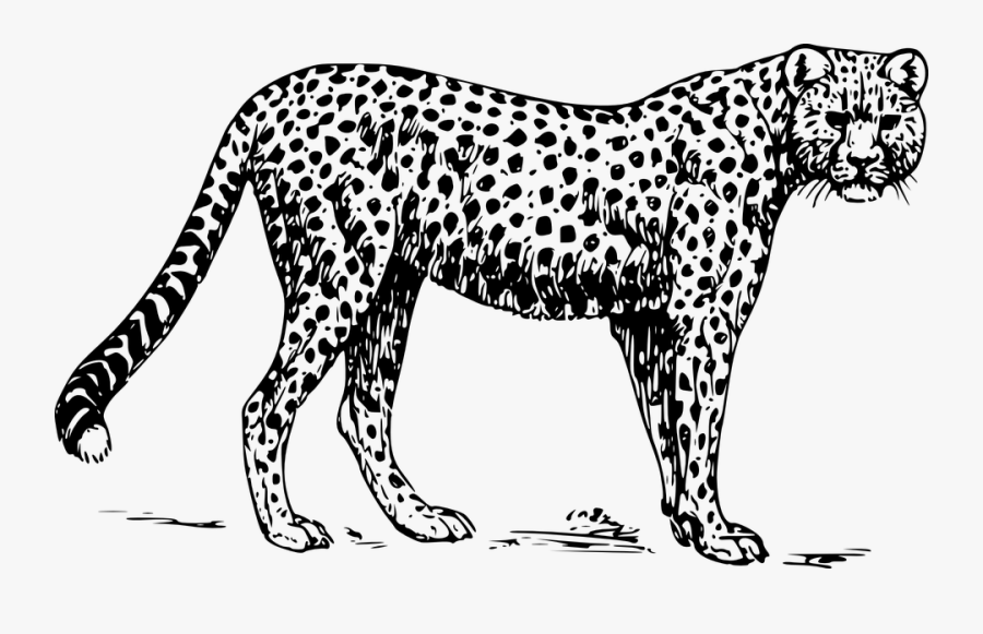 Black And White Png Zoo - Cheetah Black And White, Transparent Clipart