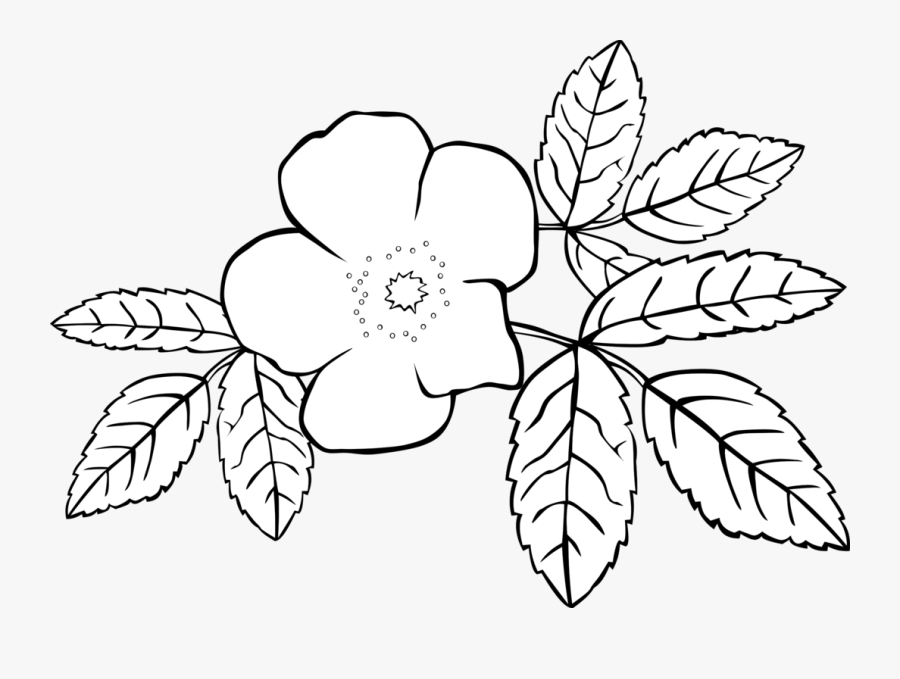 Rose Clipart Coloring - Jasmine Flowers Coloring Page, Transparent Clipart