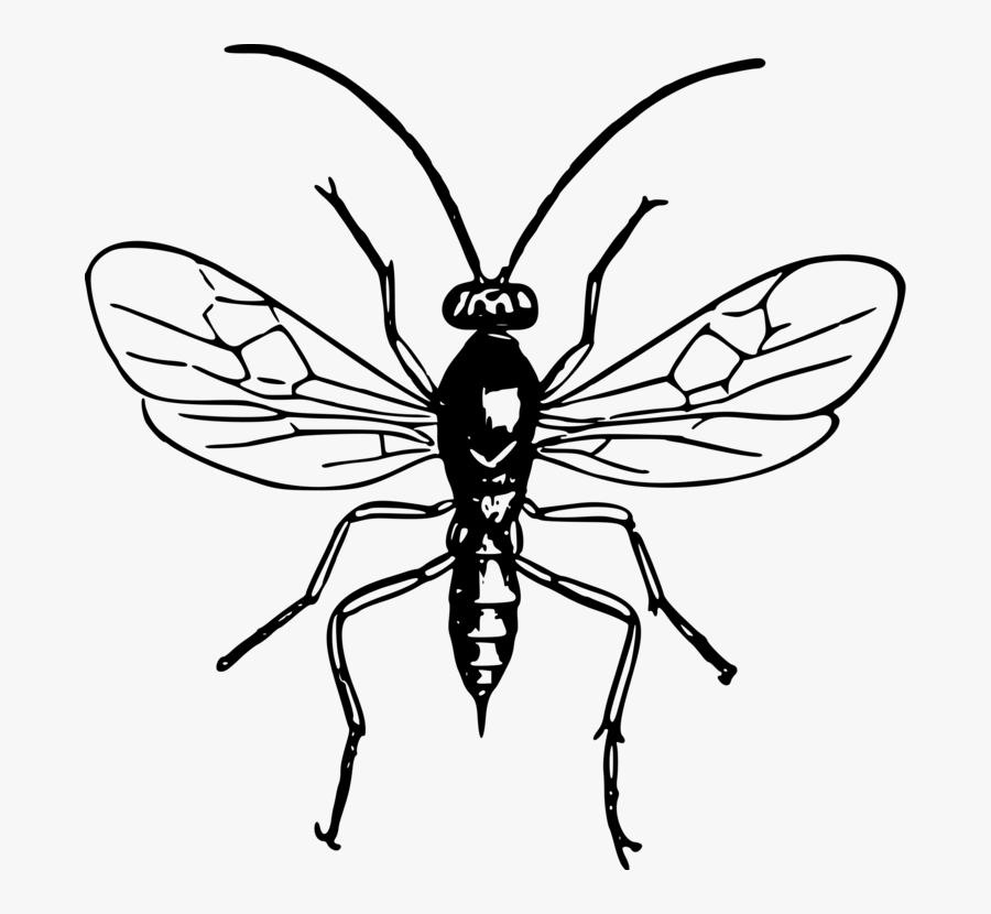 Symmetry,monochrome Photography,monochrome - Black And White Wasp Pictures Clip Art, Transparent Clipart
