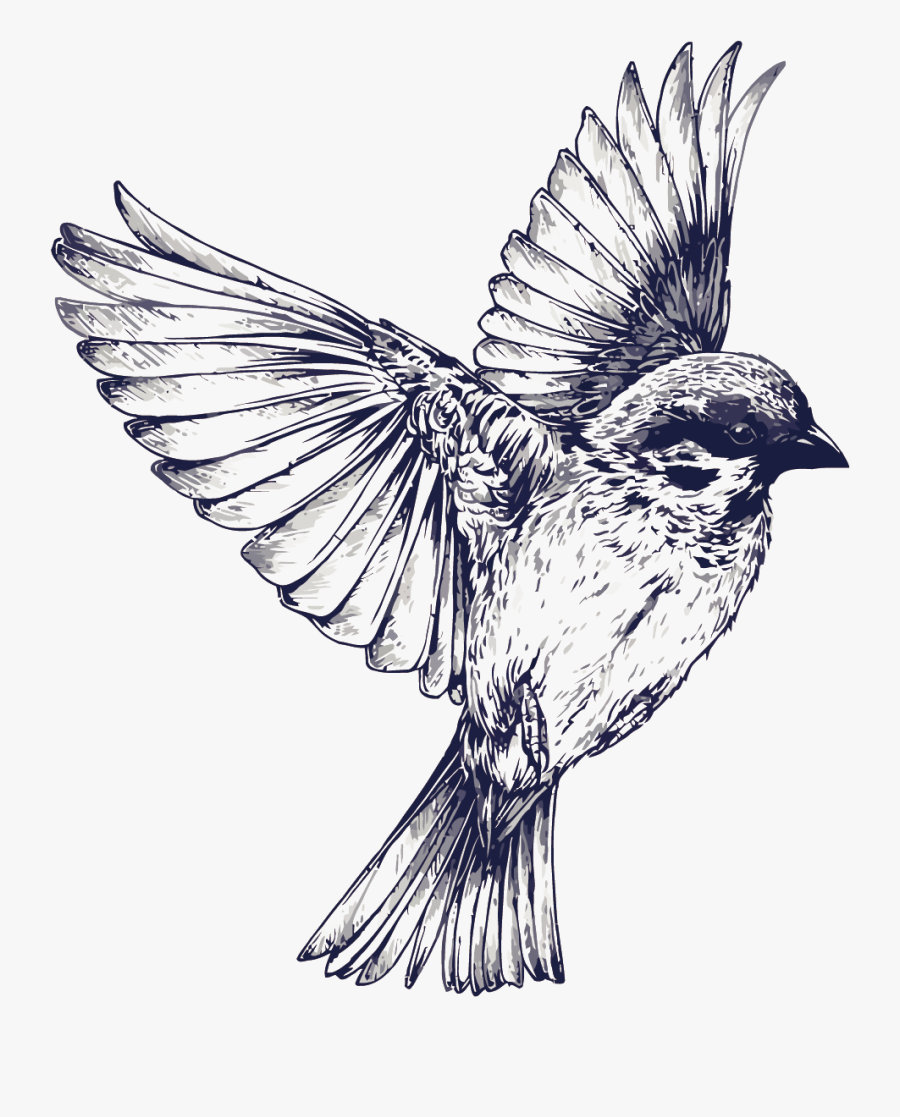Tattoo Flight Sparrow Painted Drawing Vector Swallow - Bird Tattoo Black And White, Transparent Clipart