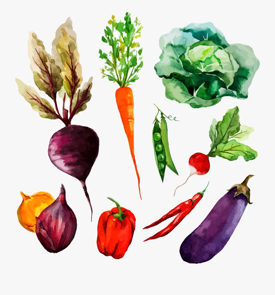 Drawing Vegetable Radish Transparent Png Clipart Free - Watercolor Drawing Of Vegetables, Transparent Clipart