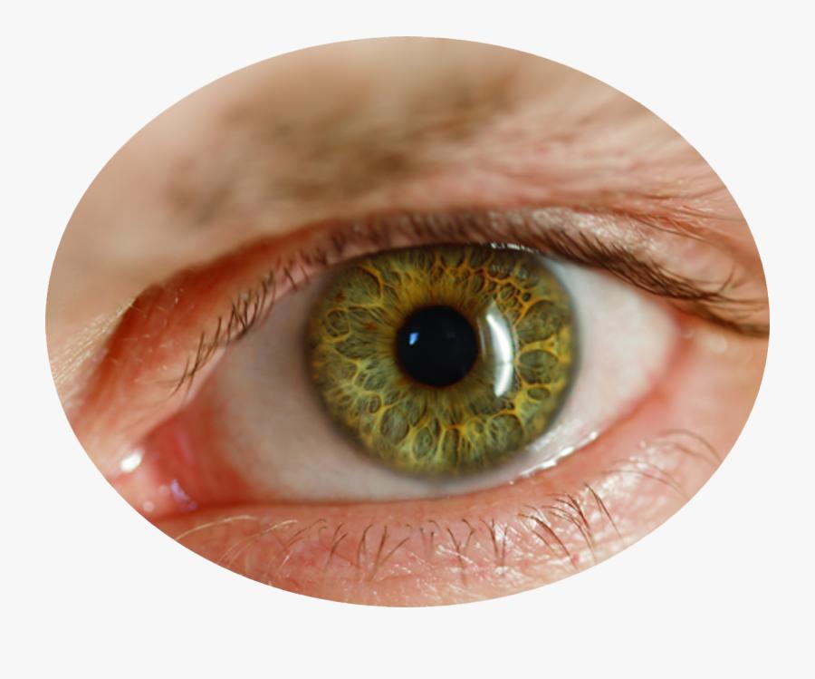 Brown Eyes Png - Human Eye Transparent Background, Transparent Clipart