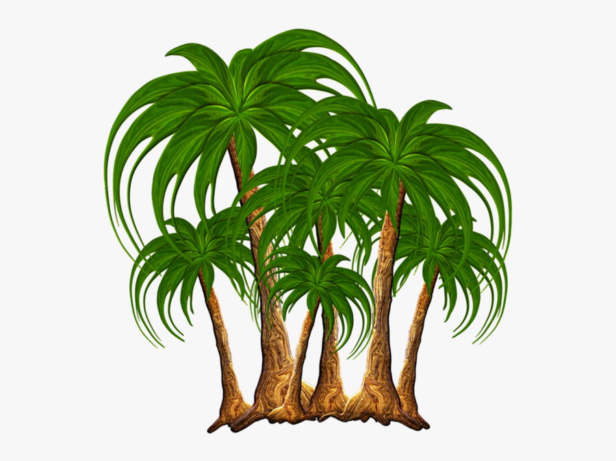 Tree Nature Palm Tree Png, Transparent Clipart
