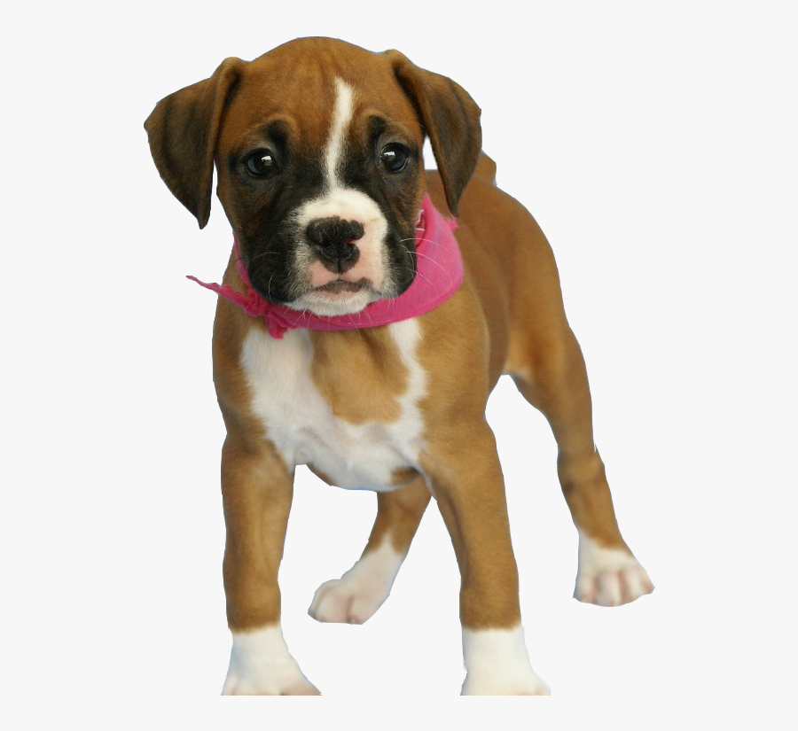 Dog Png Image Png Download - Boxer Dog Breed Baby, Transparent Clipart