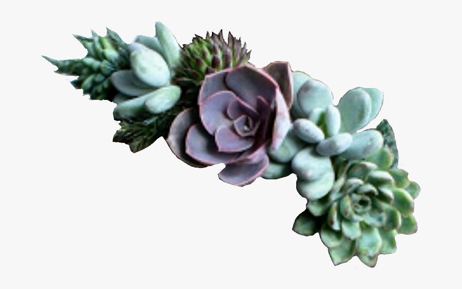 Succulent Clipart Echeveria - Succulent Plant, Transparent Clipart