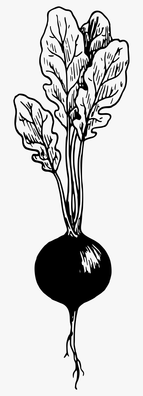 Transparent Radish Png - Black And White Radish Clip Art, Transparent Clipart