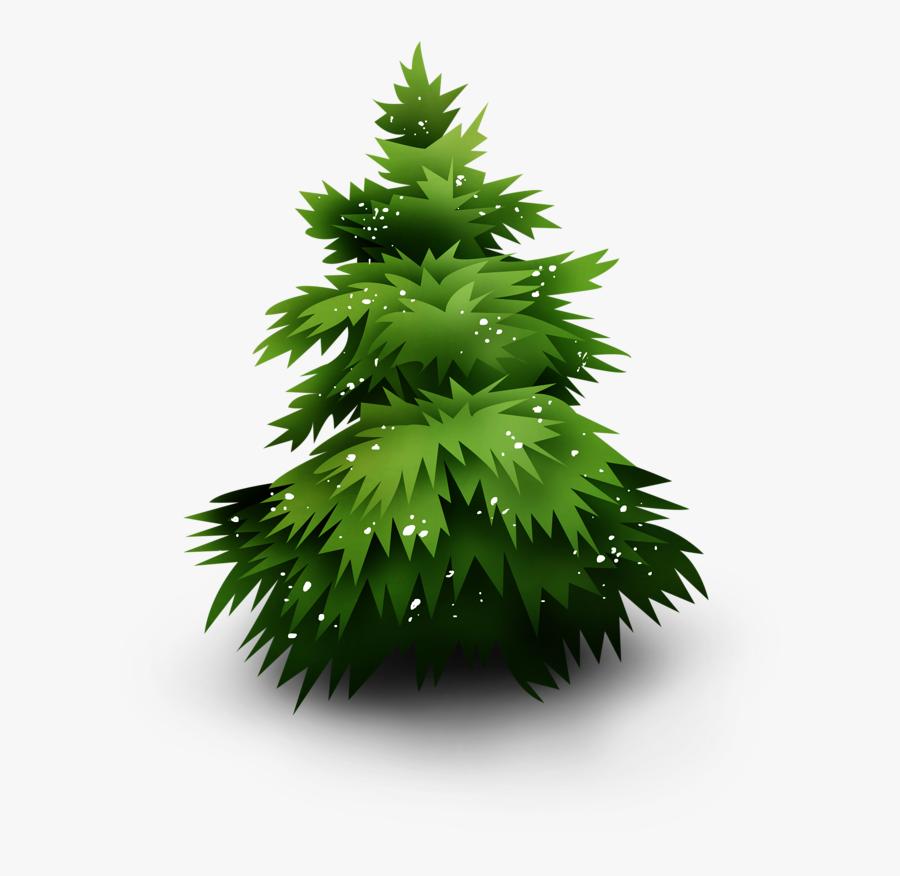 Spruce, Transparent Clipart