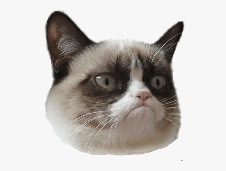 Cat Face Png - Grumpy Cat Head Transparent, Transparent Clipart