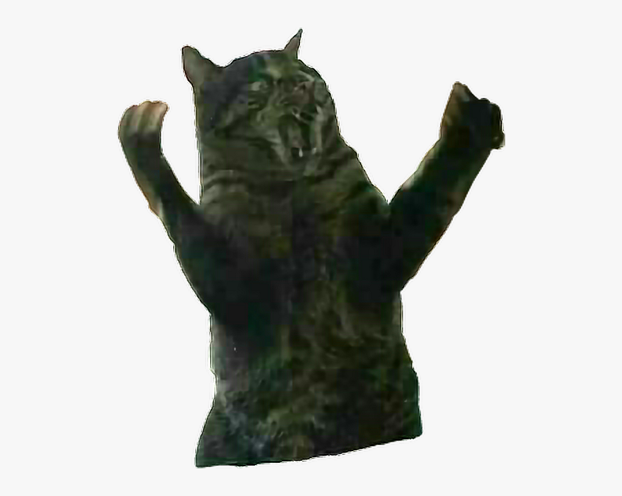 #remixit #cat #fatcat #surprise #rage #angry #animal - Domestic Short-haired Cat, Transparent Clipart