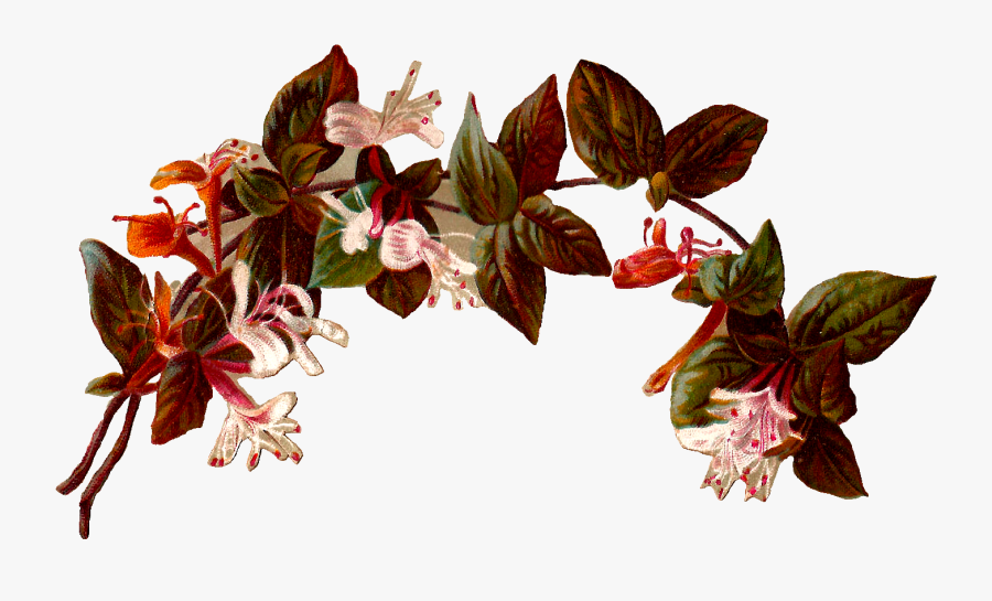 Vintage Flower Clipart Transparent - Border Vintage Flower Png, Transparent Clipart