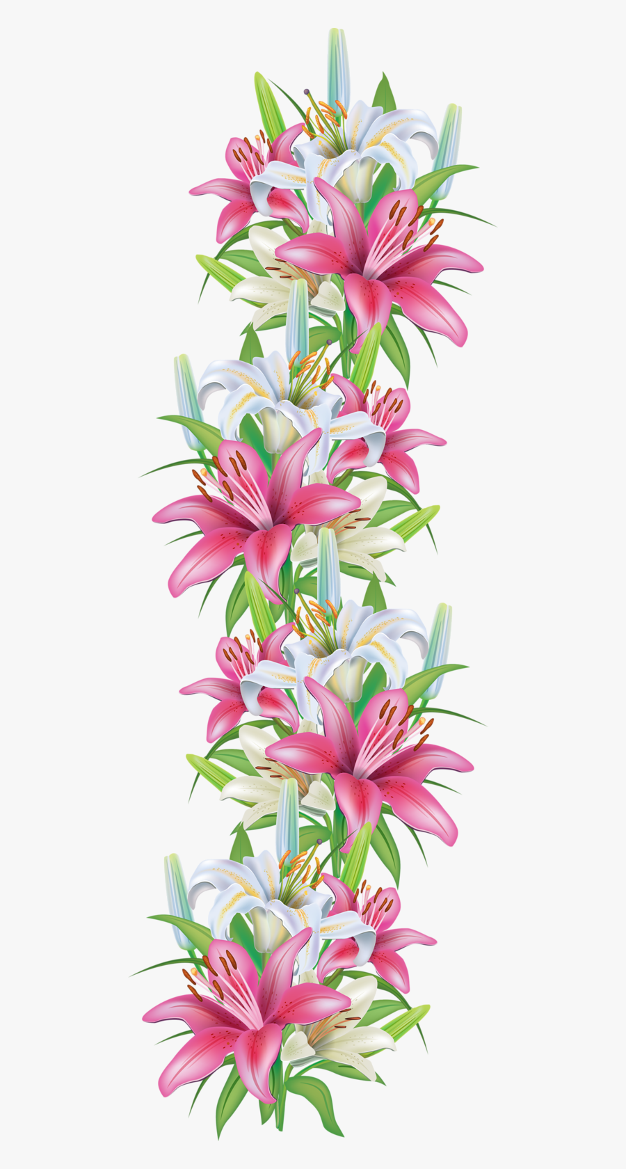 Transparent Lily Flower Png - Pink Lily Flower Border, Transparent Clipart