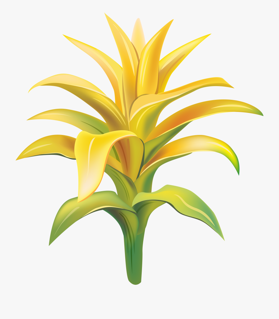 Tropical Exotic Flowers Png, Transparent Clipart