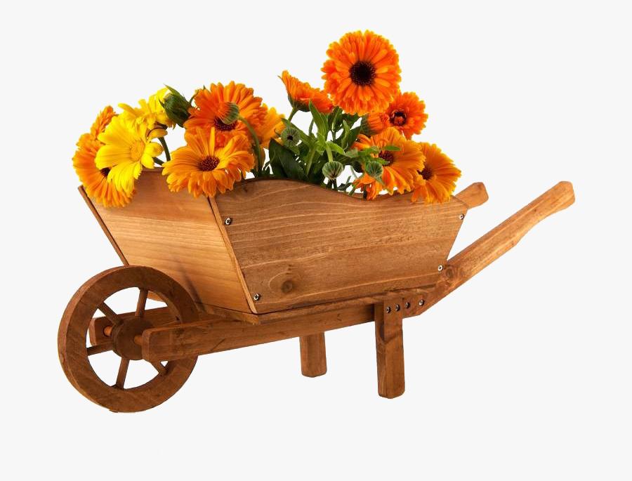 Wheelbarrow Flower Marigold Photography - Wheelbarrow Full Of Chocolate, Transparent Clipart