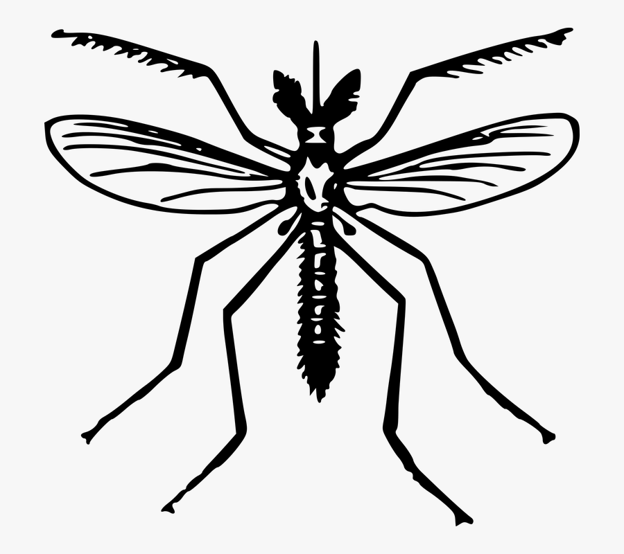 Animal, Fly, Insect, Mosquito - Clip Art Of Mosquito, Transparent Clipart